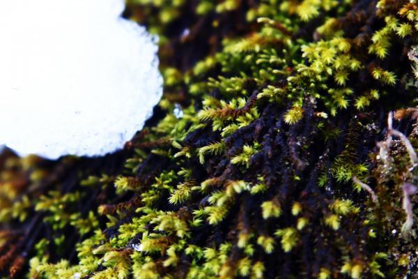 苔の壁紙/画像素材
